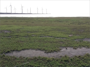 The devastated Gaomei Wetland Habitat and the adjacent wind farm.